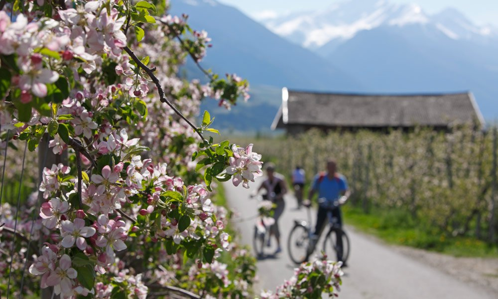 To the fruit blossom in the Frühlingstal or to Kaltern