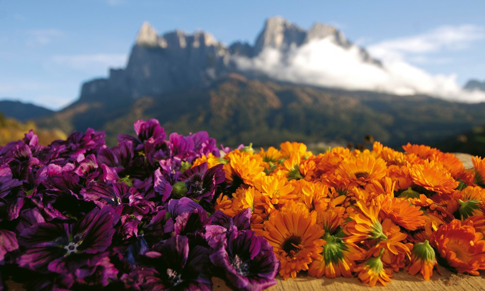 Spring holidays in South Tyrol